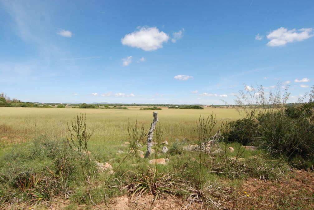 - Rustic plot with basic project located 800m from Ses Salines