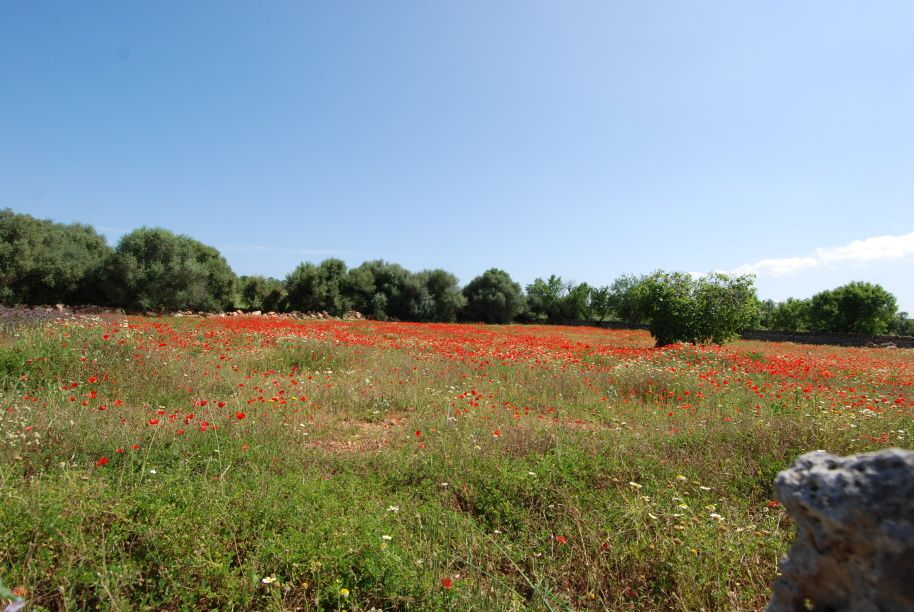 - Rustic plot with building permission just 600m from Campos
